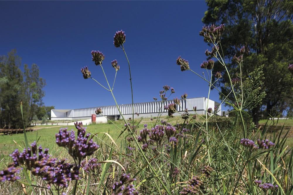 澳大利亚植物银行australian plant bank bvn donovan hillBVN Donovan Hill (20)